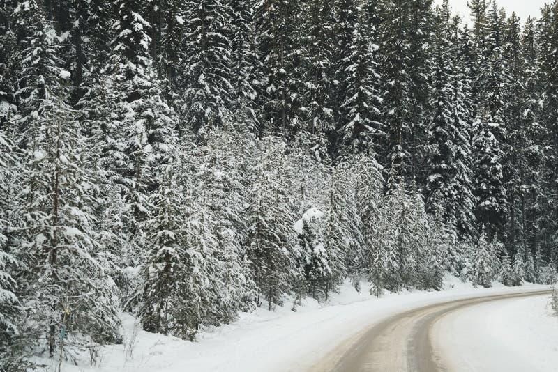 Wijąca droga przez pięknej zimy sceny wzdłuż Banff parka narodowego łęku Dolinnego Parkway z śnieżnymi sosnami i lodowatymi droga fotografia stock