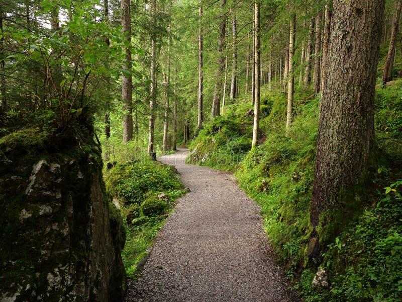Wijąca lasowa ścieżka przy późnym latem zdjęcie stock