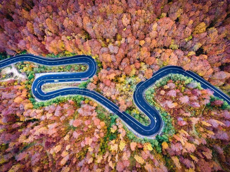 Wijącej drogi synklina las w Transylvania, Rumunia obrazy stock