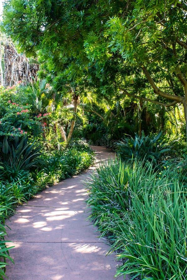 Wijący chodzący droga przemian przez tropikalnego zielonego krzaka wypełniał ogrodowych, nawisłych drzewa, obraz royalty free
