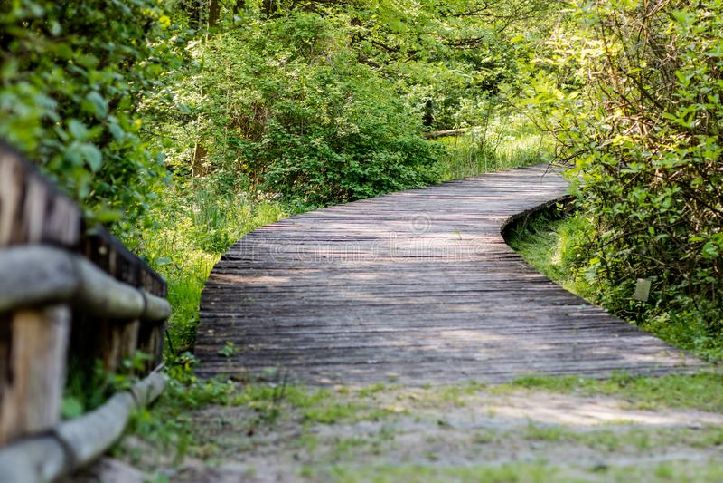 Wijący drewniany most w lasu A lasowej ścieżce prowadzi acr zdjęcie royalty free