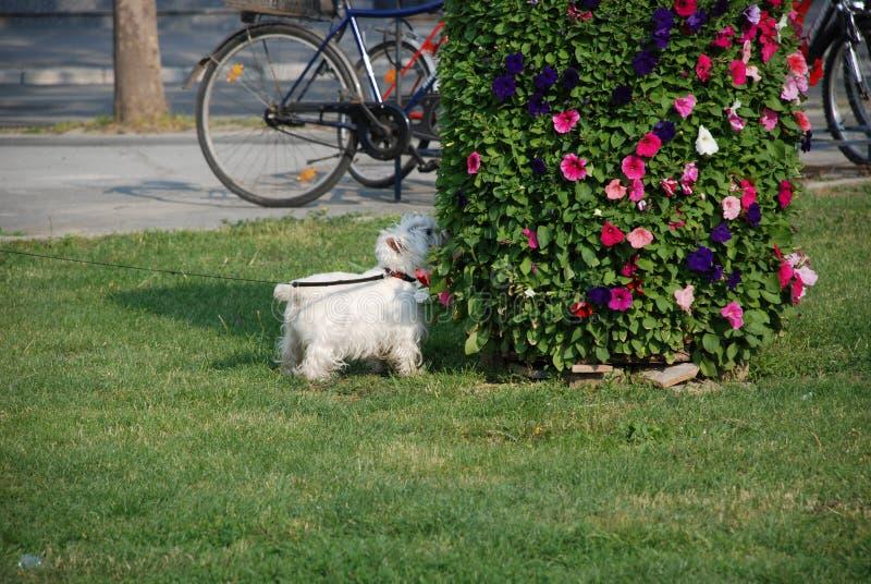 Wij hebben ook honden voor de bloemen royalty-vrije stock afbeelding