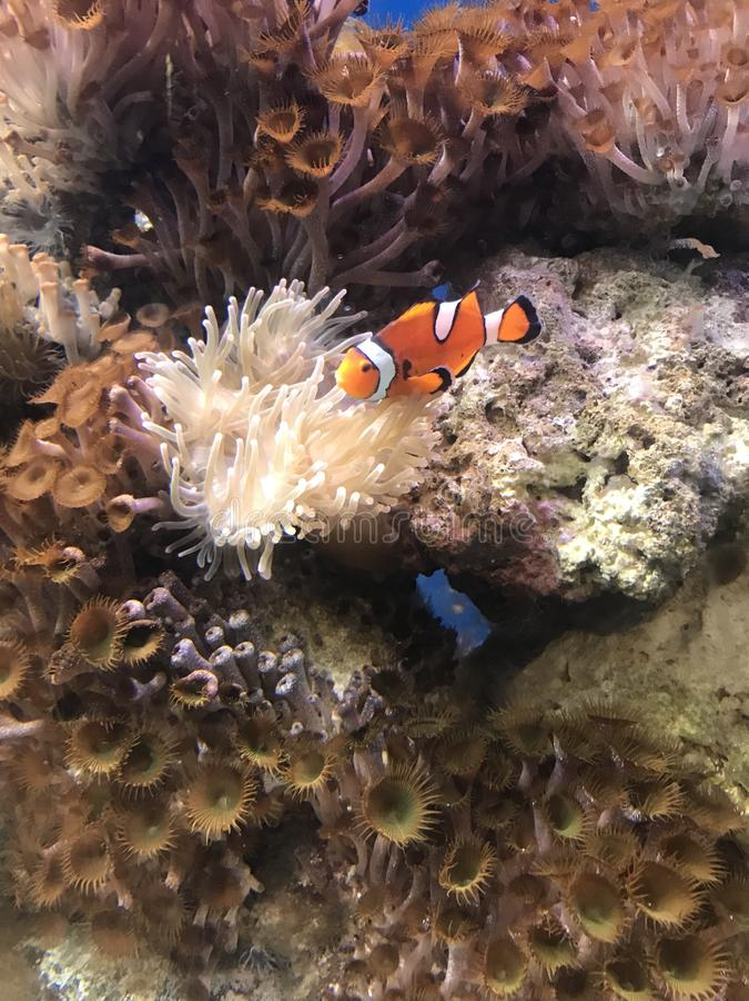 Wij vonden Nemo royalty-vrije stock foto's