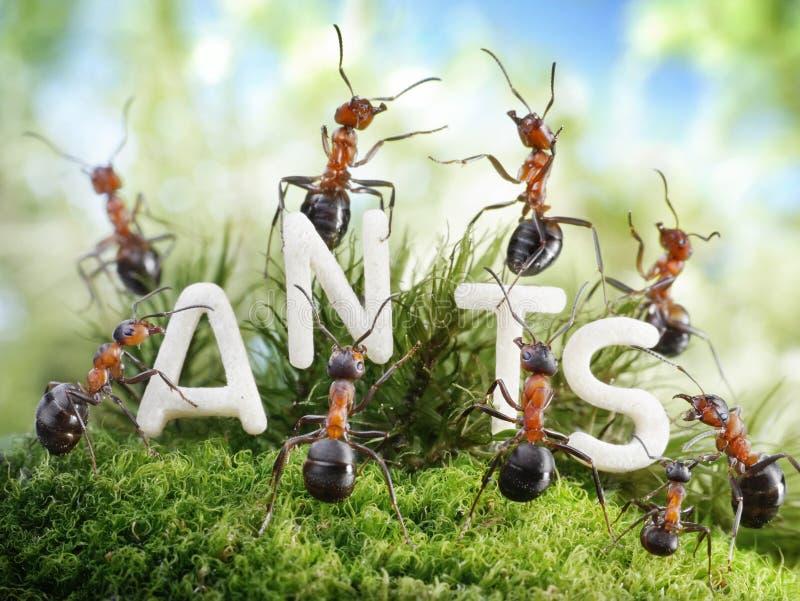 Wij zijn de Mieren. mierenverhalen royalty-vrije stock fotografie