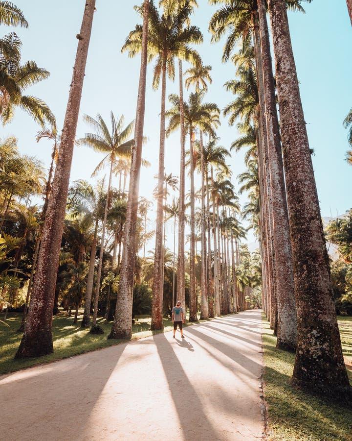 Wijd Geschoten van Botanische Tuin in Rio de Janeiro royalty-vrije stock afbeelding