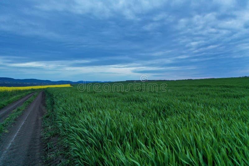 Wijd geschoten van een grasgebied dichtbij een weg met mooie blauwe hemel royalty-vrije stock foto's
