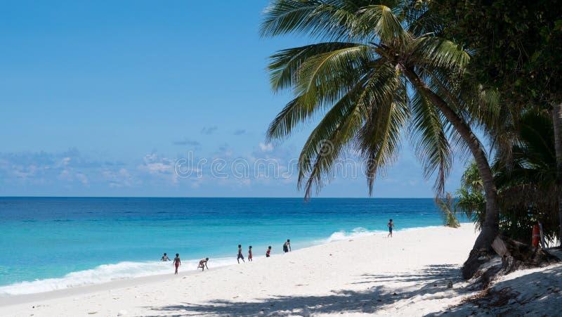Wijd geschoten van jonge geitjes die op een zandig strand in de Maldiven met duidelijk blauw water en een lange palm spelen stock afbeelding