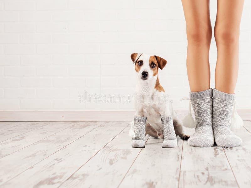 Wijfje en hond in sokken stock afbeeldingen