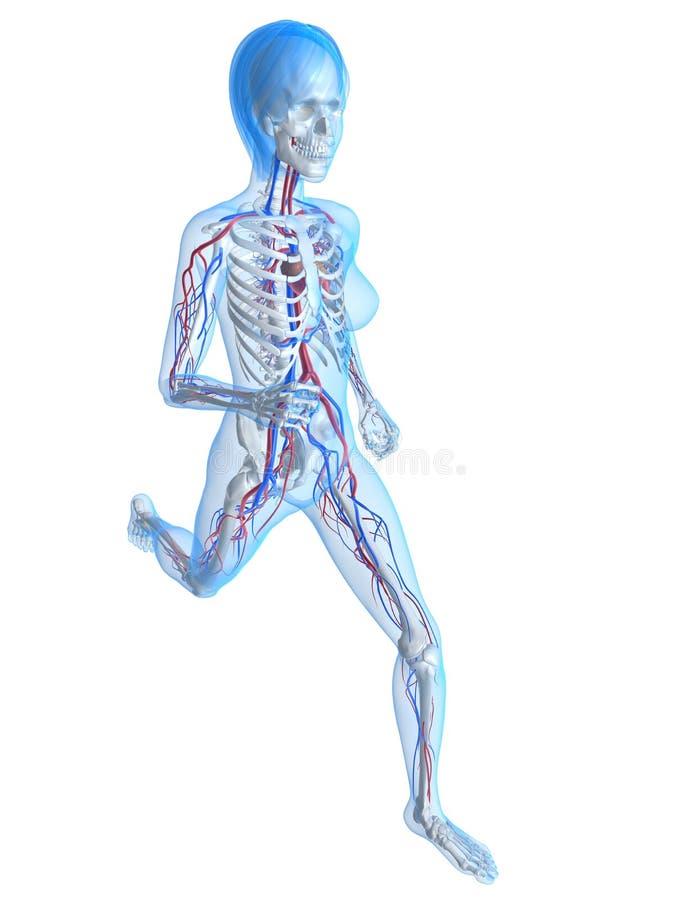 Wijfje jogger stock illustratie