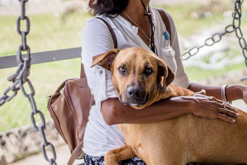 Wijfje met haar handen op een bruine metgezelhond royalty-vrije stock afbeelding