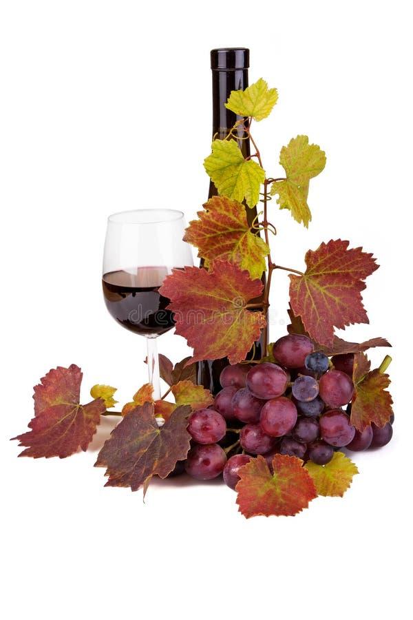 Wijn, glas en druiven stock foto