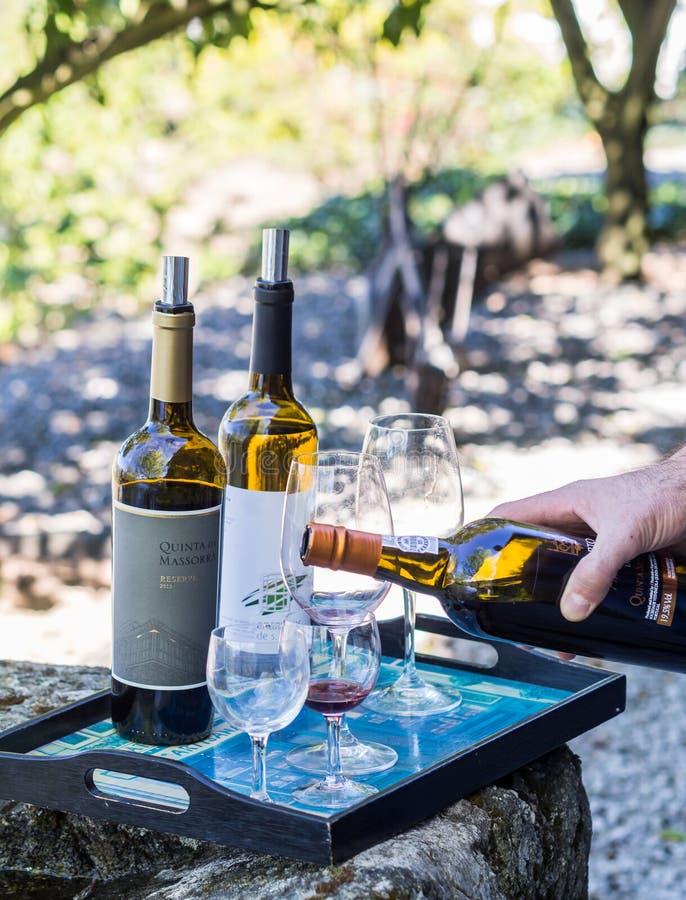 Wijn het proeven in Vale do Douro, Portugal stock afbeeldingen