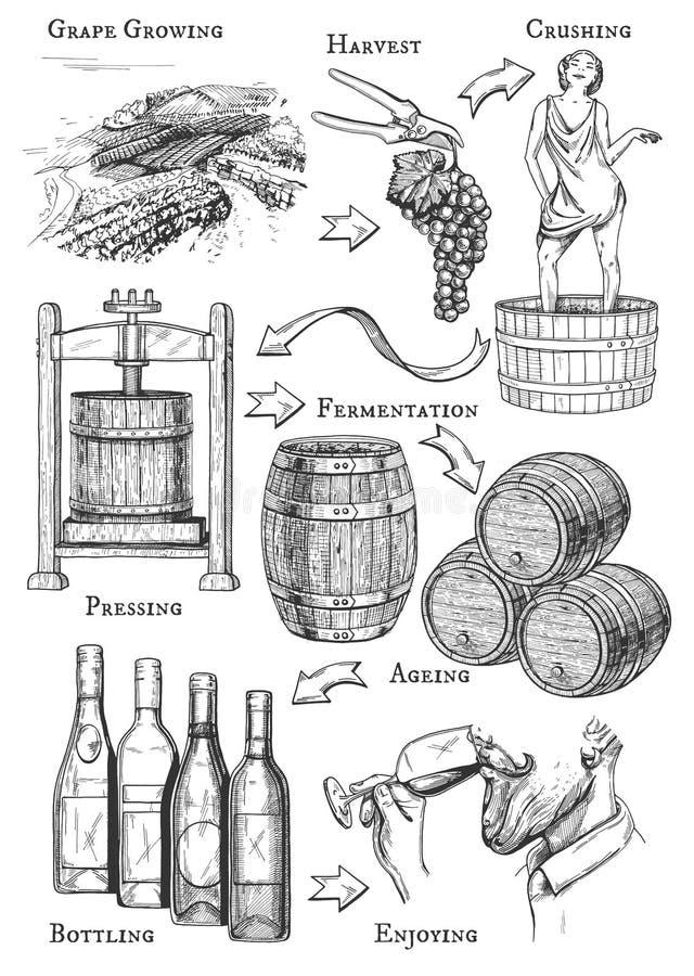 Wijn makend proces stock illustratie