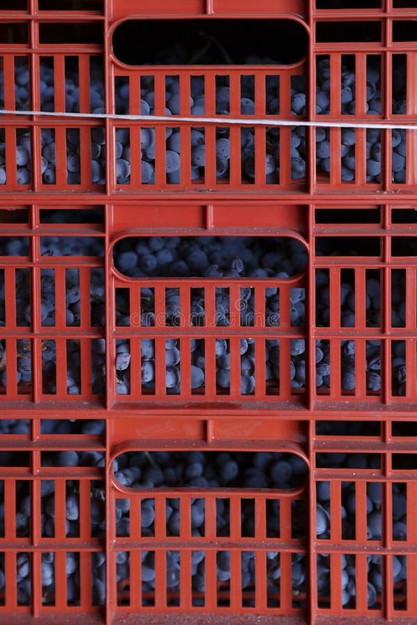 Wijn van druiven de Italiaanse gebieden royalty-vrije stock afbeeldingen