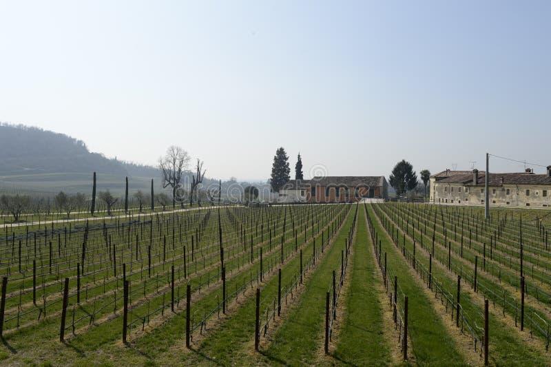 Wijn van wijngaard de Italiaanse gebieden stock afbeeldingen
