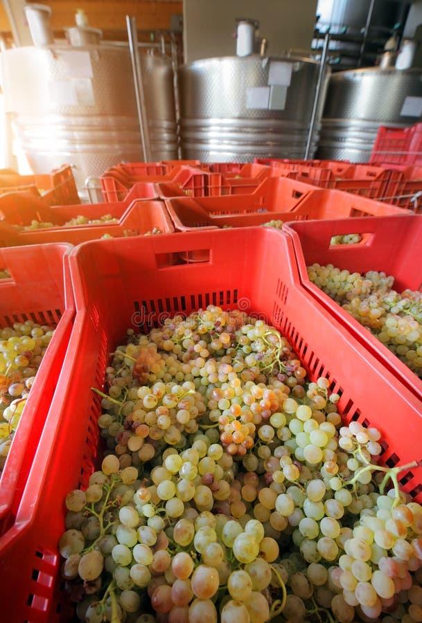 Wijnbereiding met druiven stock afbeeldingen