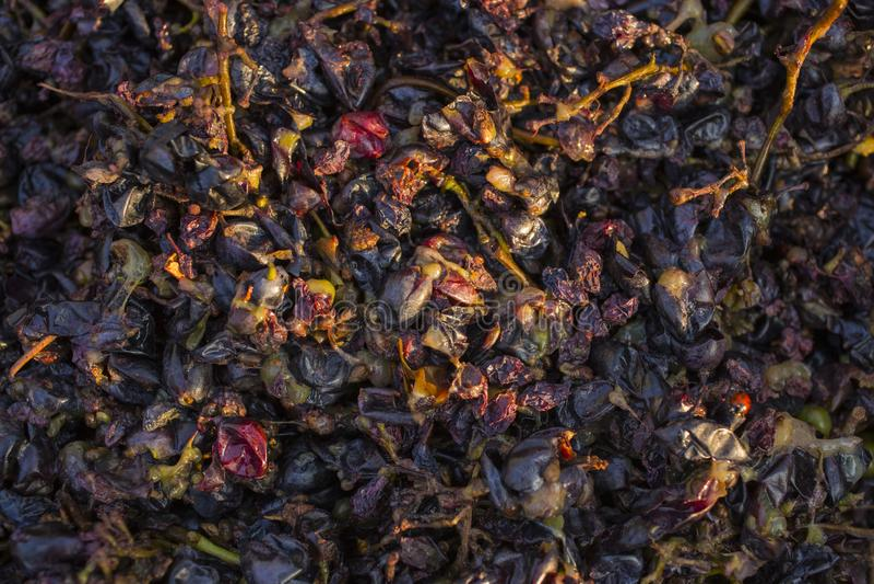 Wijnbereiding Technologie van wijnproductie stock foto's