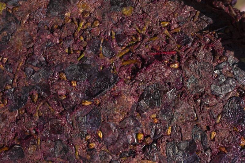 Wijnbereiding Technologie van wijnproductie stock afbeelding