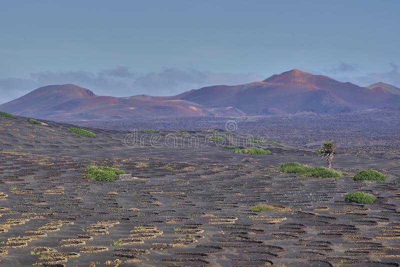 Wijnbouw in La Geria op het Eiland Lanzarote, Canarische Eilanden royalty-vrije stock foto's