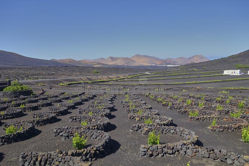 Wijnbouw in La Geria op het Eiland Lanzarote, Canarische Eilanden royalty-vrije stock foto