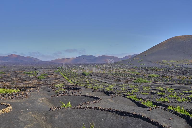 Wijnbouw in La Geria op het Eiland Lanzarote, Canarische Eilanden royalty-vrije stock fotografie