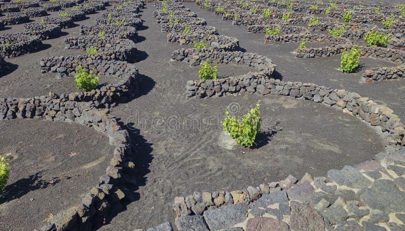 Wijnbouw in La Geria op het Eiland Lanzarote op de Canarische Eilanden royalty-vrije stock fotografie