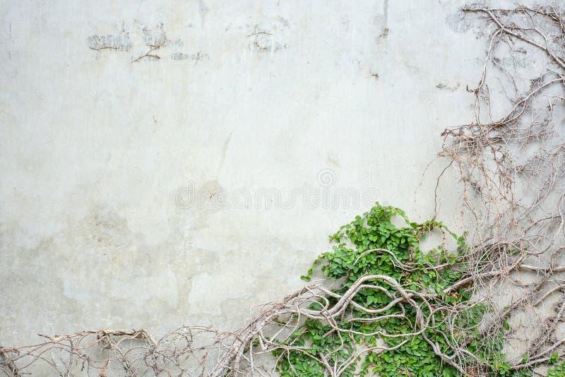 Wijnbouw op concrete muur royalty-vrije stock foto's