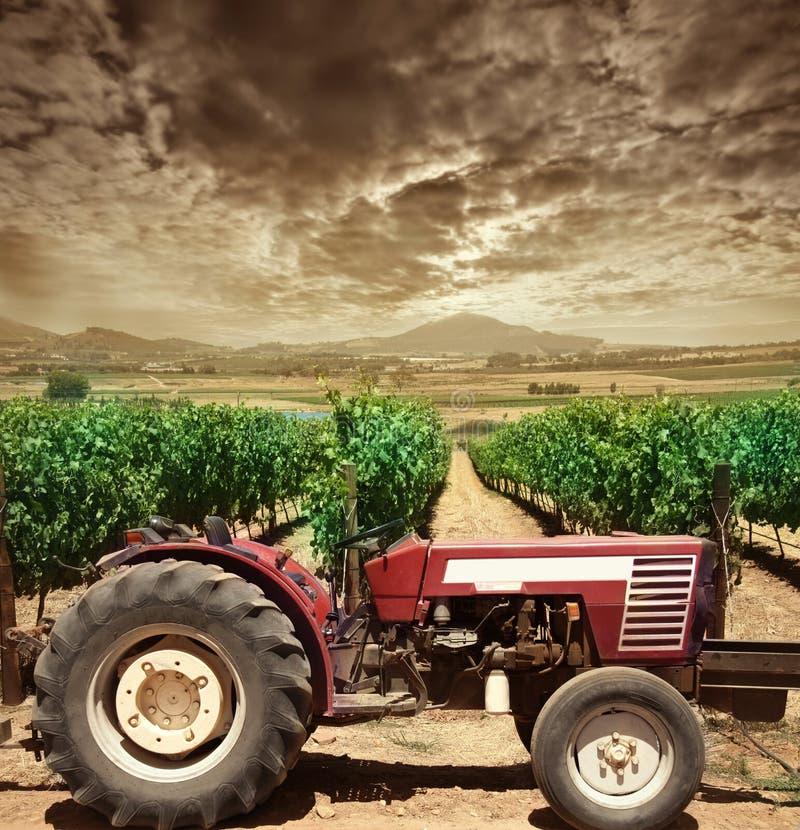 Wijngaard stock afbeeldingen