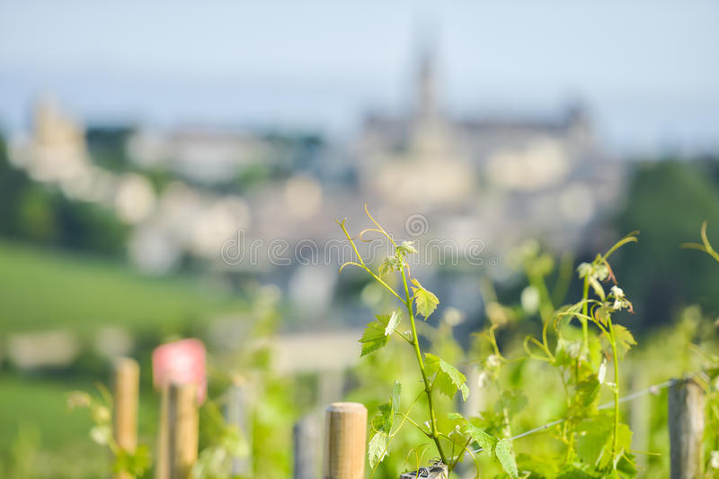 Wijngaard bij Sring en dorp van Saint Emilion royalty-vrije stock foto