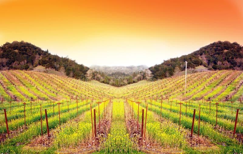 Wijngaard bij Zonsondergang stock fotografie