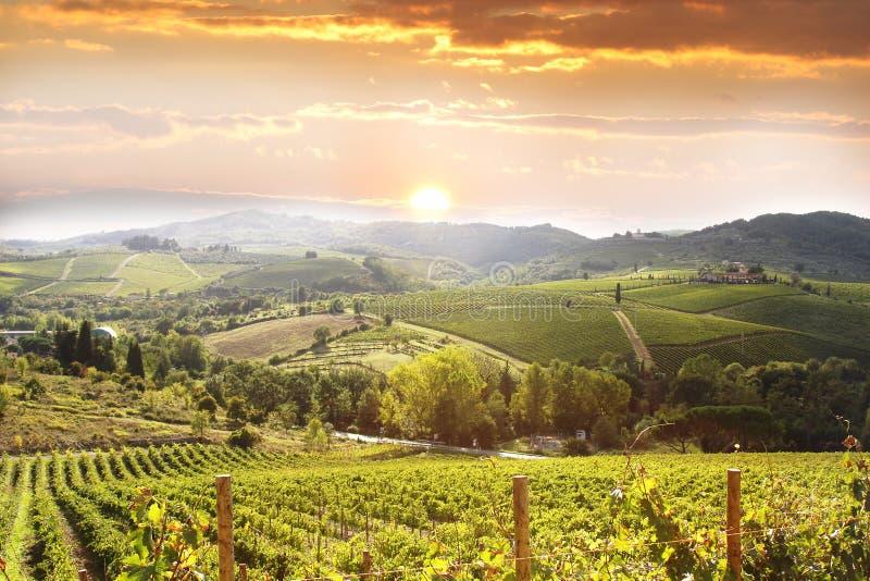 Wijngaard in Chianti, Toscanië royalty-vrije stock foto