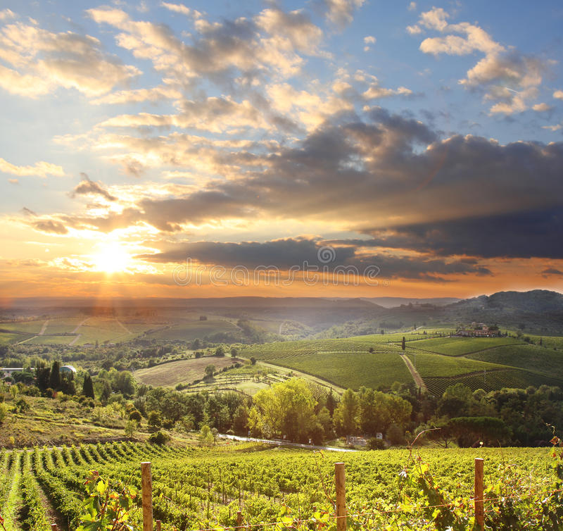 Wijngaard in Chianti, Toscanië royalty-vrije stock fotografie