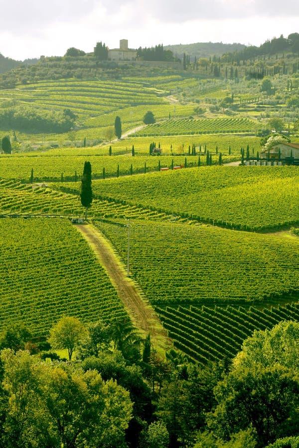 Wijngaard in Chianti, Toscanië, Italië stock afbeeldingen