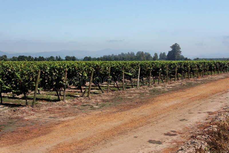 Wijngaard in Chili royalty-vrije stock foto
