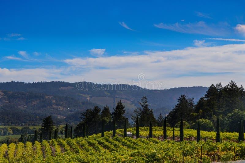 Wijngaard in Daling van Napa-Vallei royalty-vrije stock fotografie