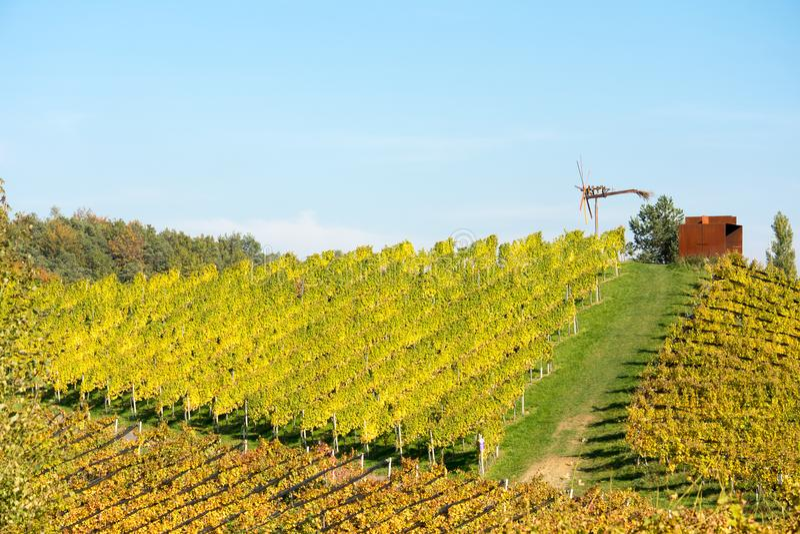 Wijngaard in de Herfst stock afbeelding