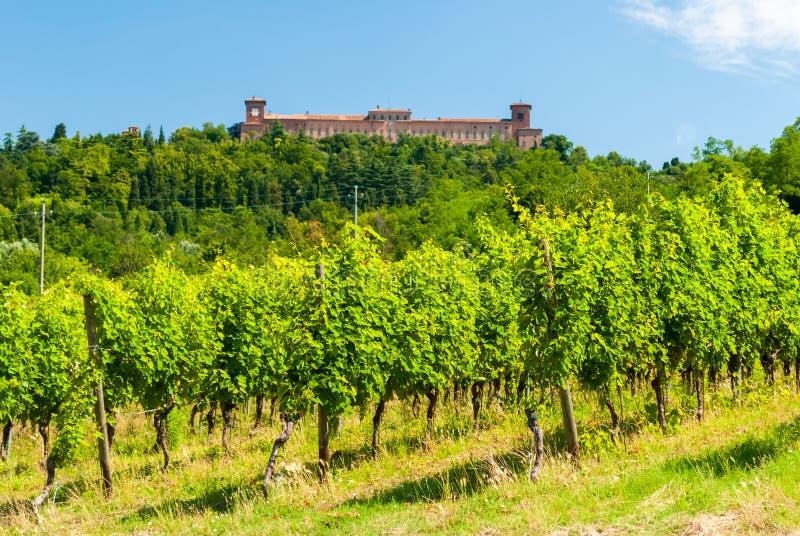 Wijngaard in de heuvels van Oltrepà ² Pavese royalty-vrije stock foto
