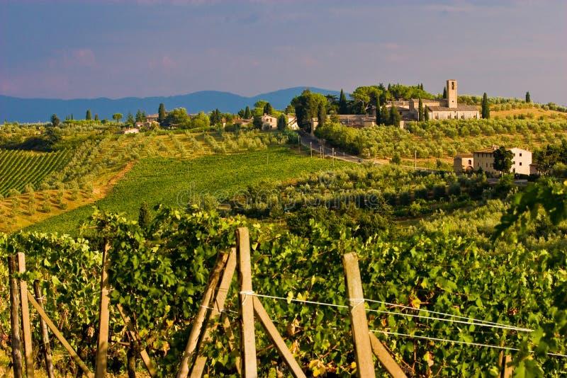 Wijngaard in de heuvels van Toscane stock foto