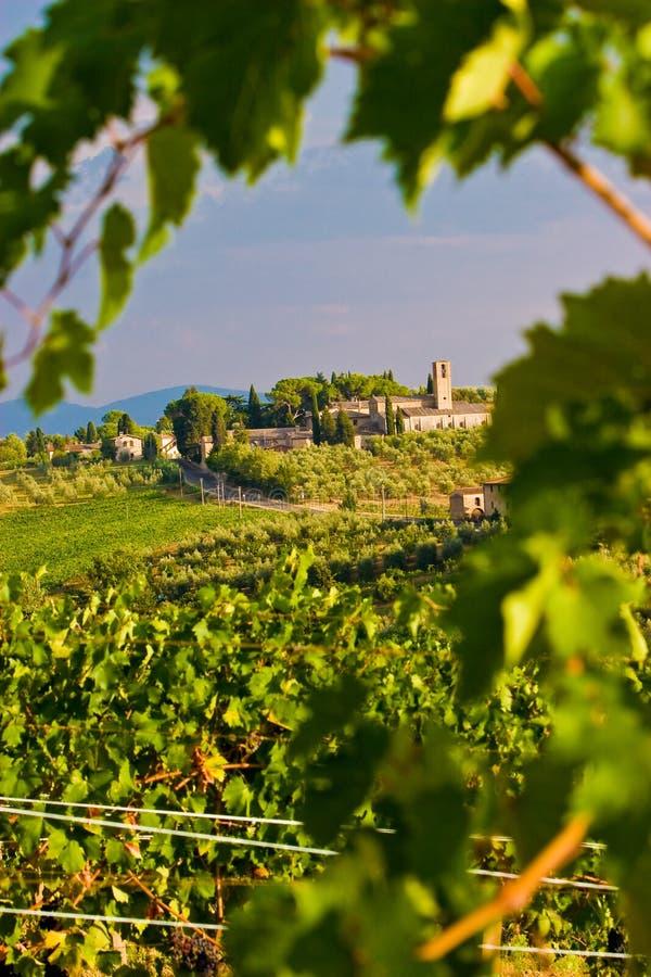 Wijngaard in de heuvels van Toscane stock fotografie