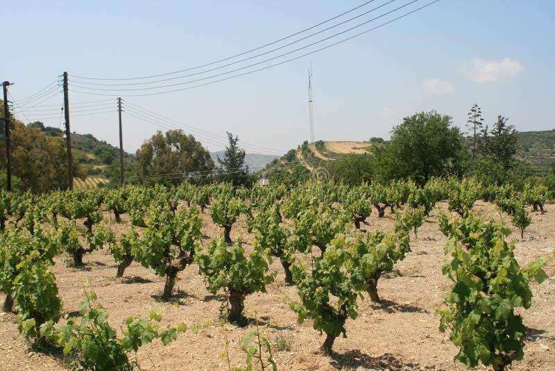 Wijngaard in de lente stock afbeeldingen