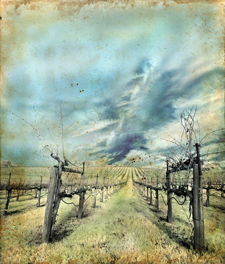 Wijngaard in de Winter op een Achtergrond Grunge royalty-vrije illustratie