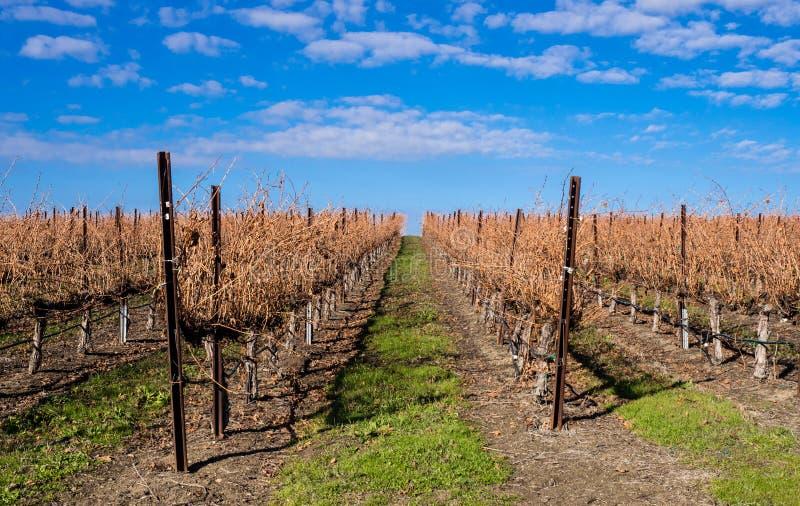 Wijngaard in de winterlatentie stock fotografie
