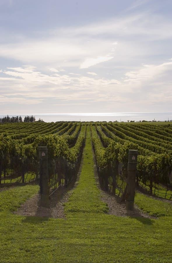 Wijngaard door het overzees stock afbeelding
