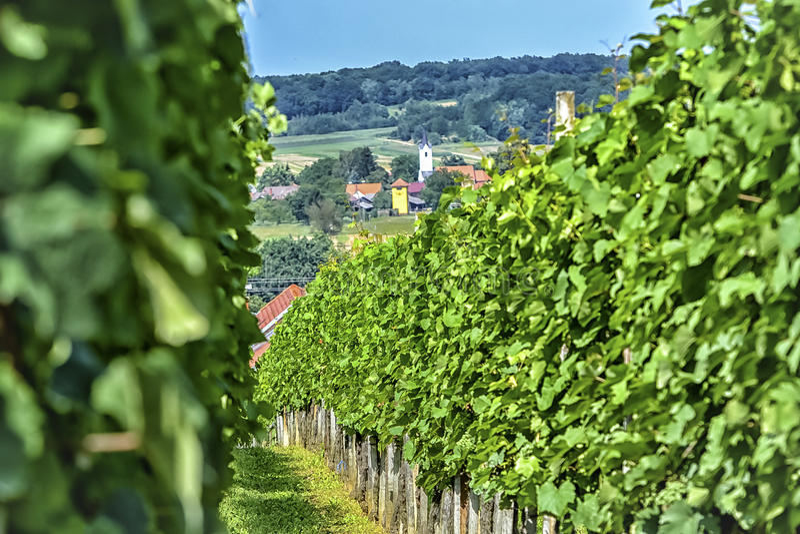 Wijngaard en dorp stock afbeelding