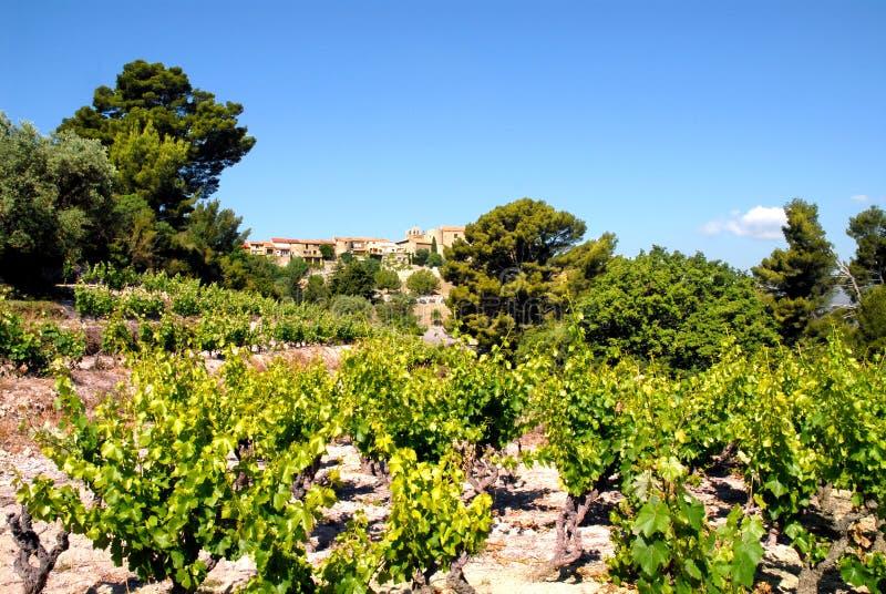 Wijngaard en dorp van Castellet royalty-vrije stock afbeelding