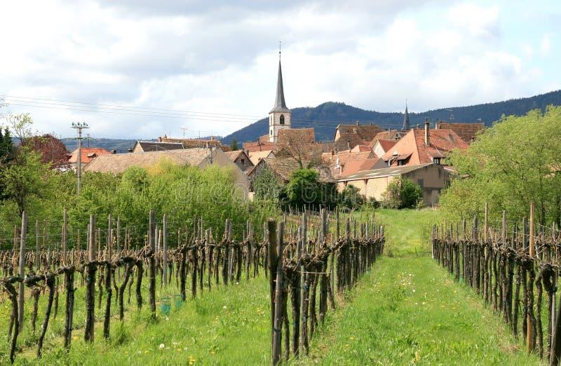 Wijngaard en het dorp Mittelbergheim, Frankrijk stock foto's