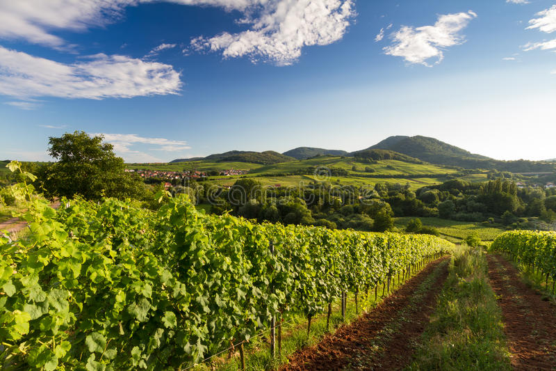 Wijngaard en heuvelig landschap in Pfalz, Duitsland stock foto