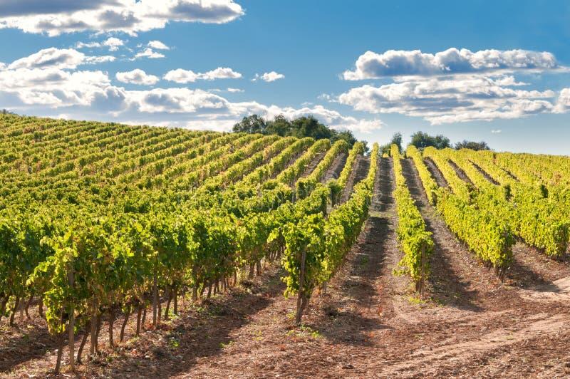 Wijngaard en heuvels, Spanje stock foto's