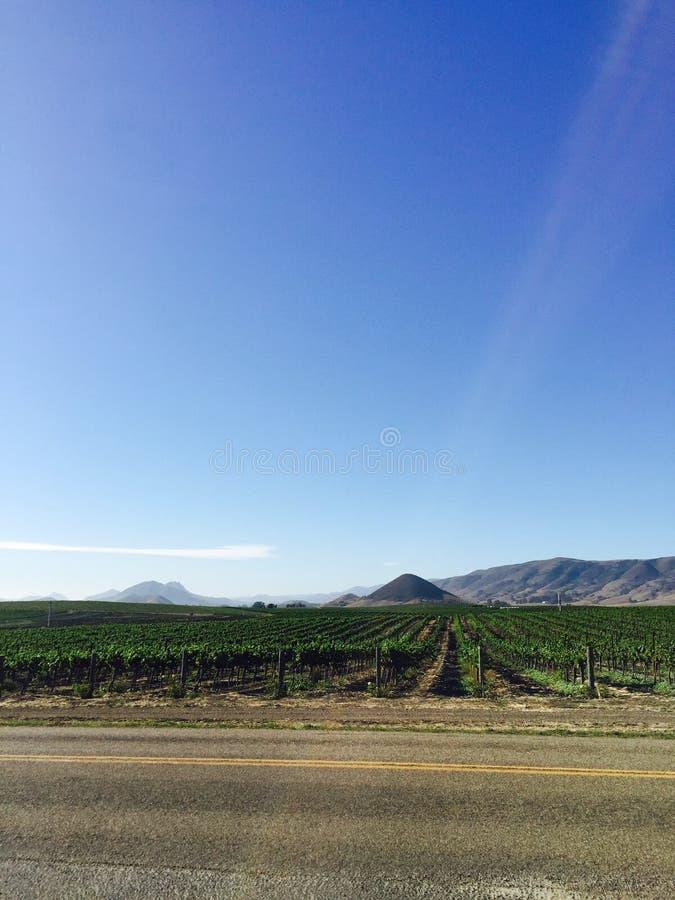 Wijngaard en wijn stock afbeeldingen