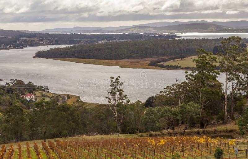 Wijngaard en wijnmakerij op de Tamar-rivierbank van Bradys-Vooruitzicht wordt bekeken dat stock foto's